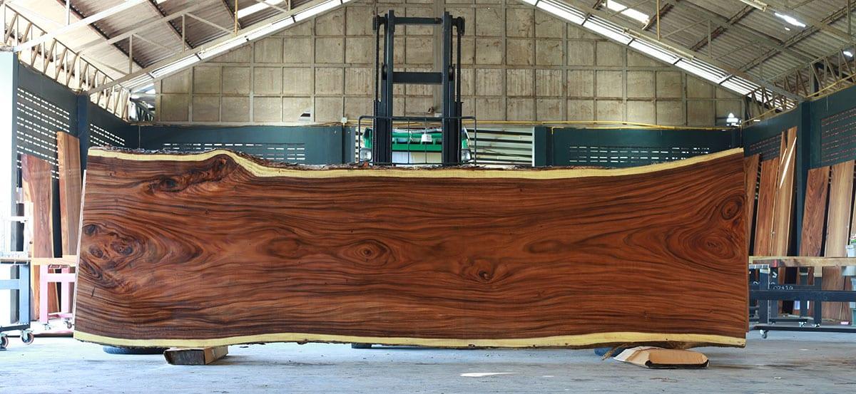 Was ist das Besondere an Suar Holz?